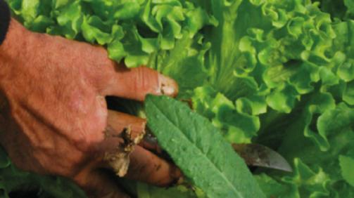 Agriculture-Cresol
